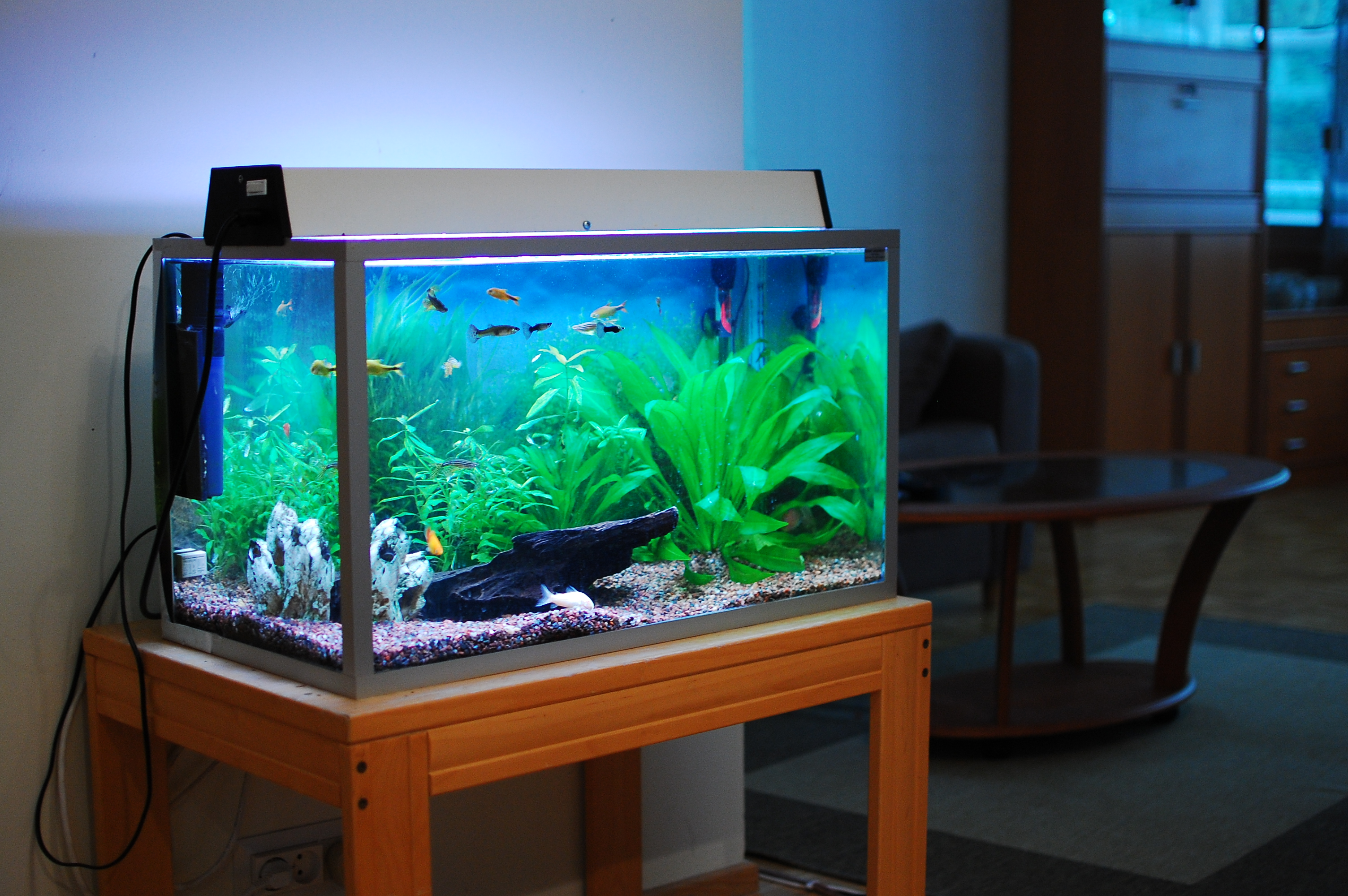 Freshwater aquarium fish tank pictures - As