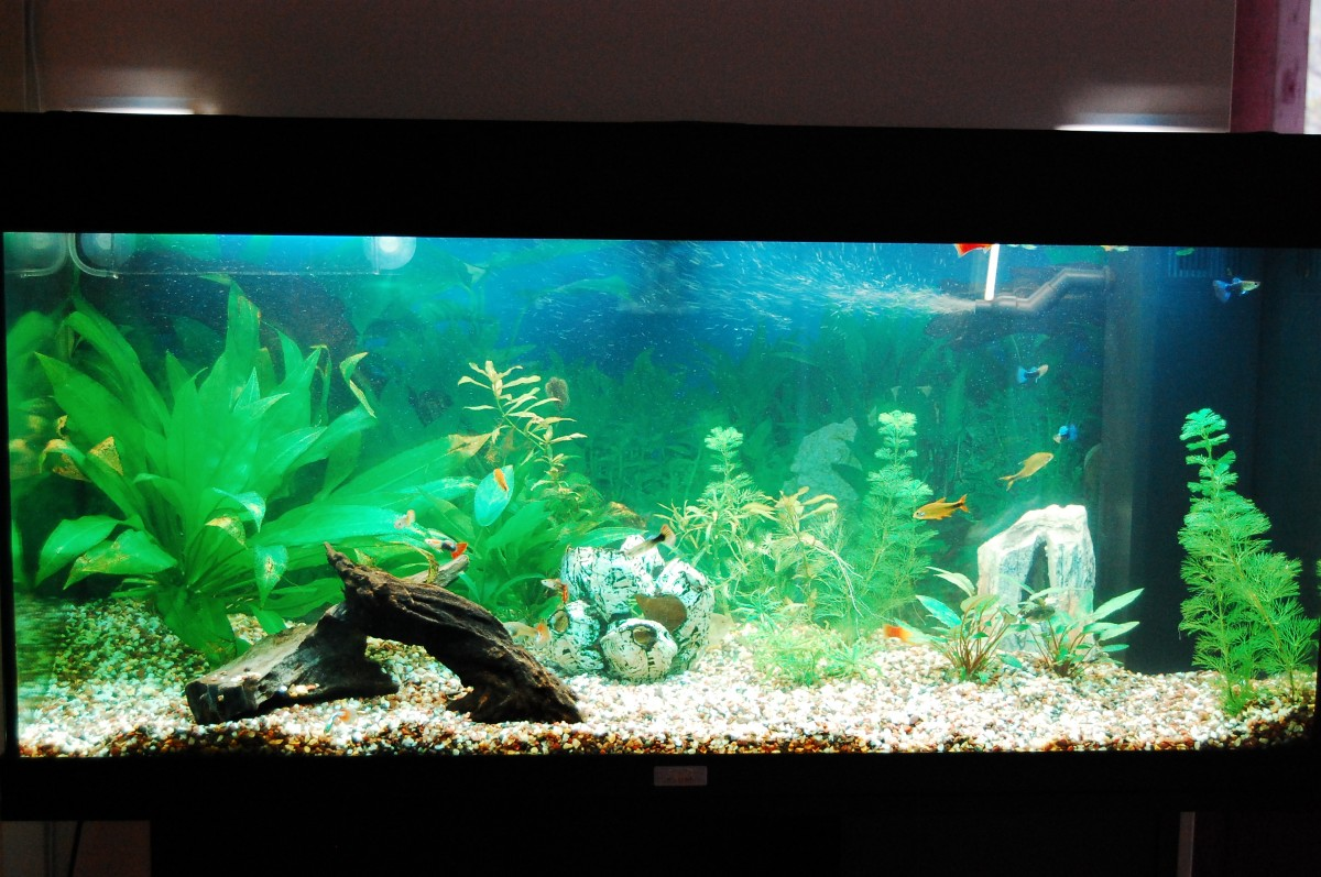Freshwater aquarium fish tank pictures - Continue Reading My Freshwater