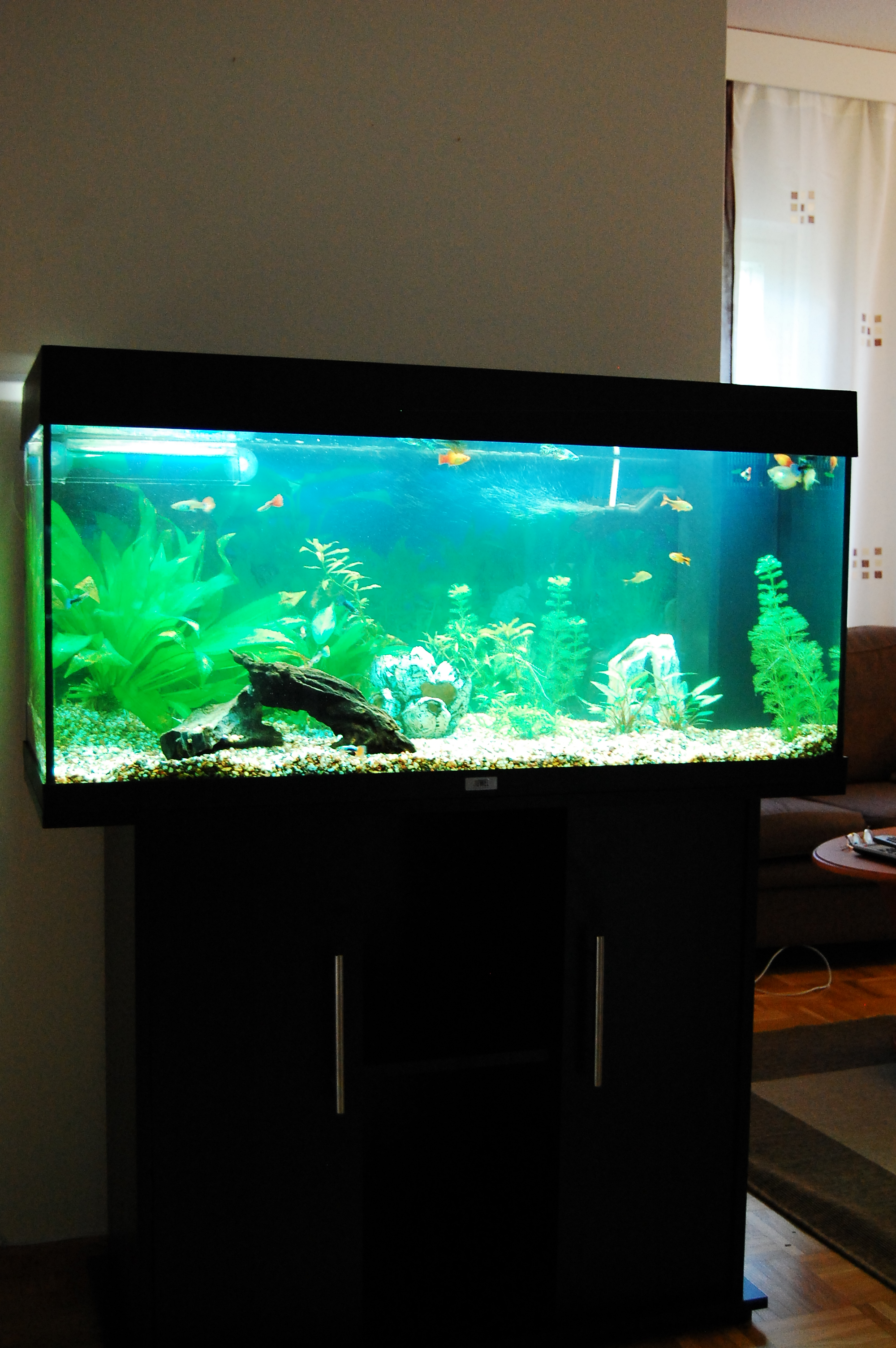 from amateur tank to pro tank freshwater aquarium talk. Black Bedroom Furniture Sets. Home Design Ideas