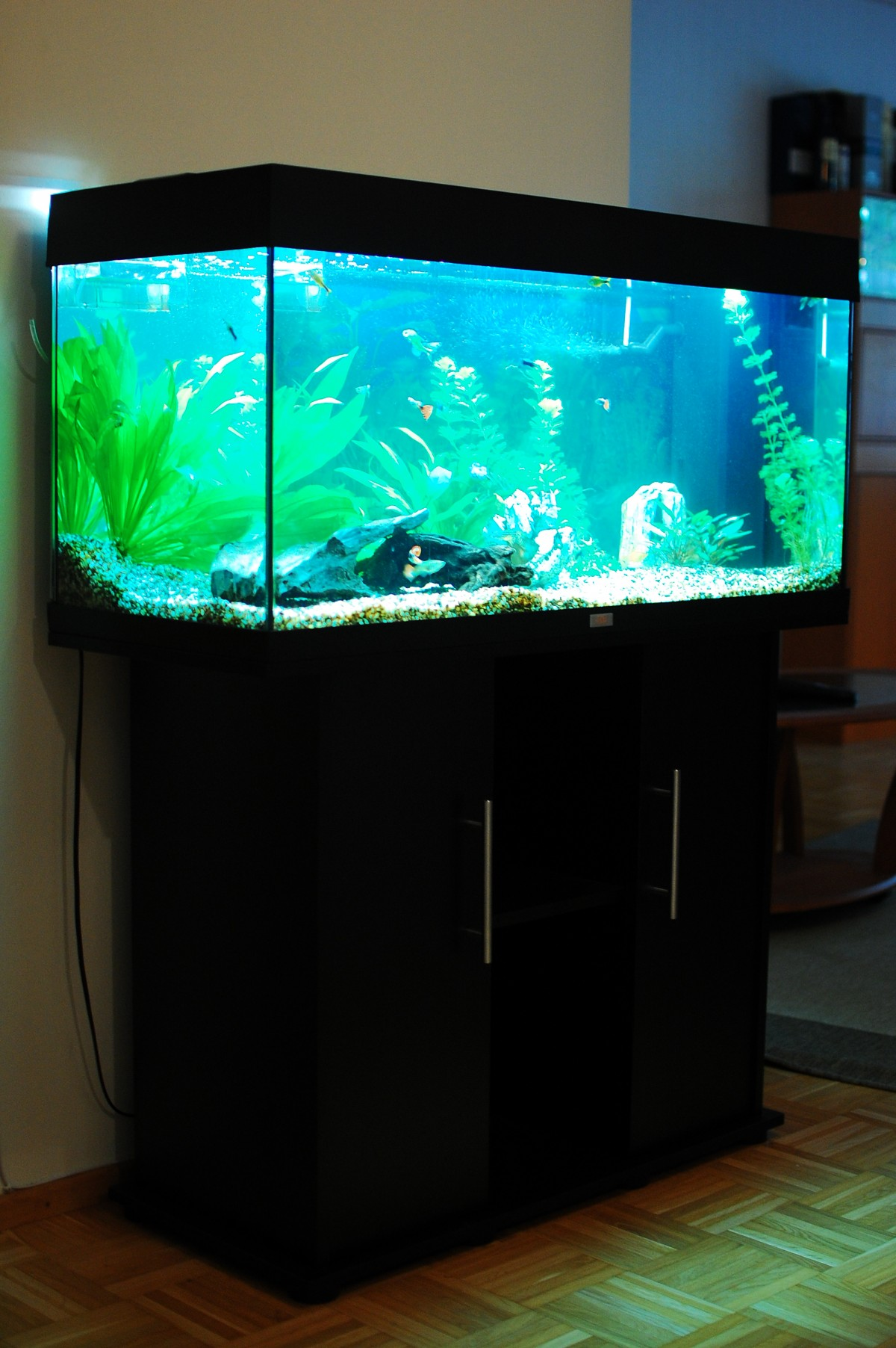 rio 180 freshwater aquarium talk. Black Bedroom Furniture Sets. Home Design Ideas