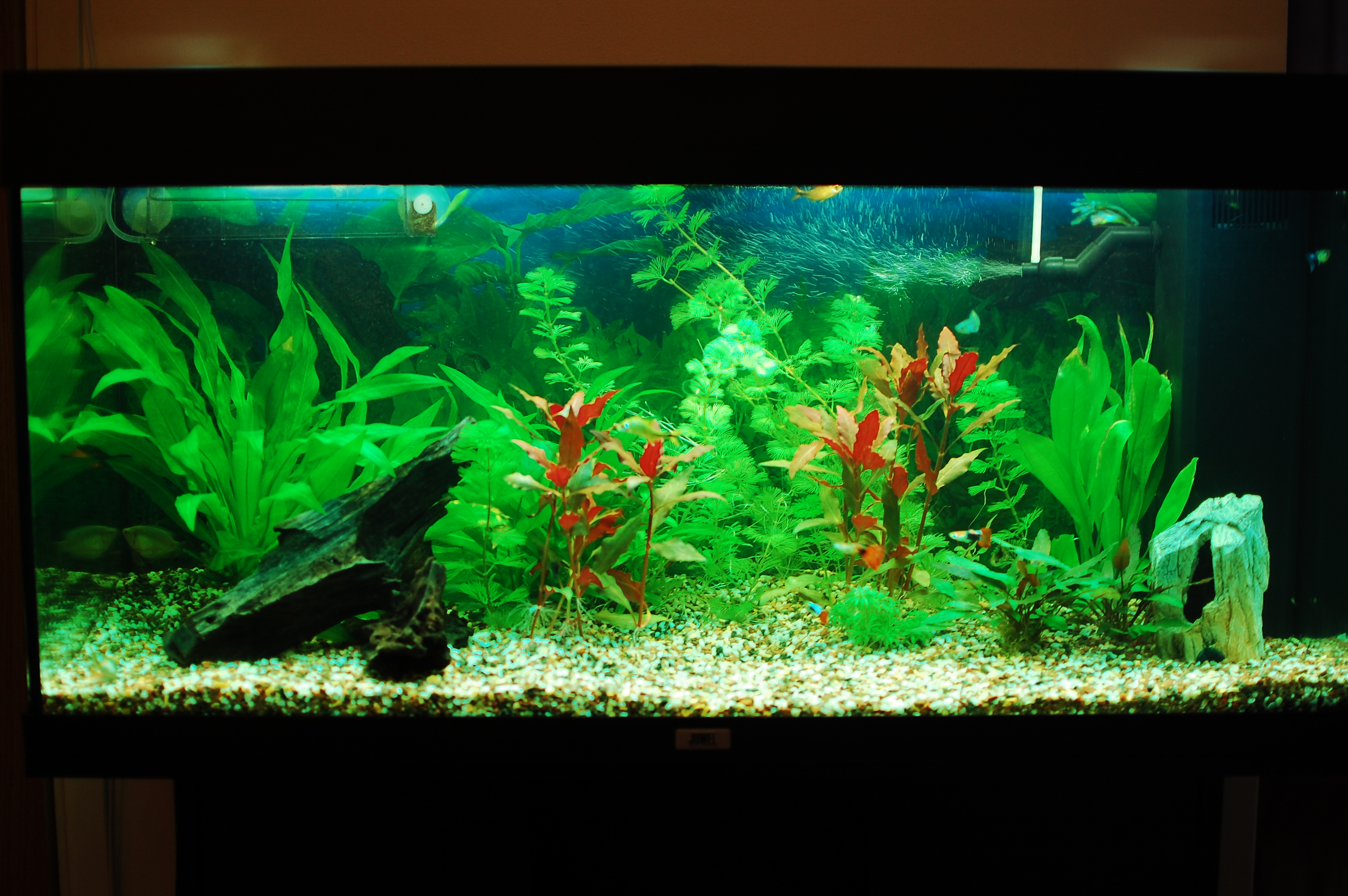 Our freshwater aquarium 30.10.2010 - Or how I made my freshwater ...