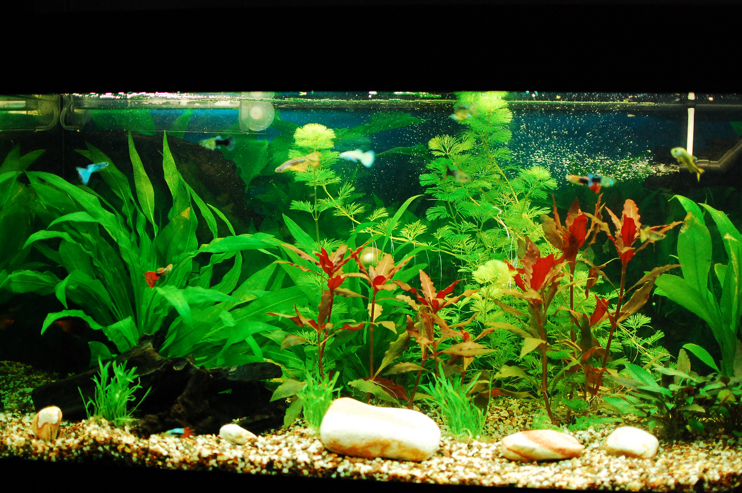 Fish aquarium with plants - Freshwater Aquarium With Good Plant Growth And Happy Guppies