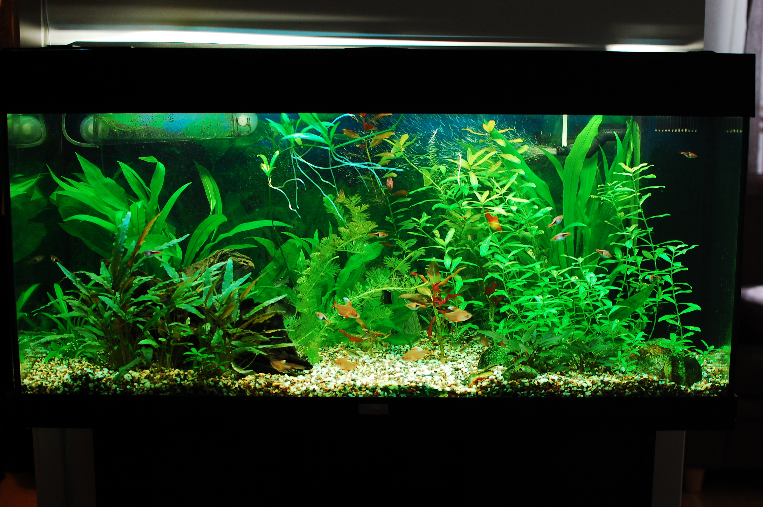 Freshwater Aquarium Plants: plant lighting, freshwater aquarium plants ...